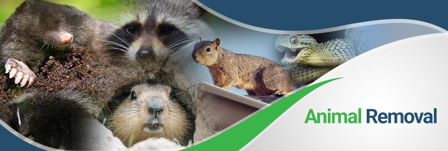 Animal Removal in Fairfax, Alexandria, and Arlington, VA