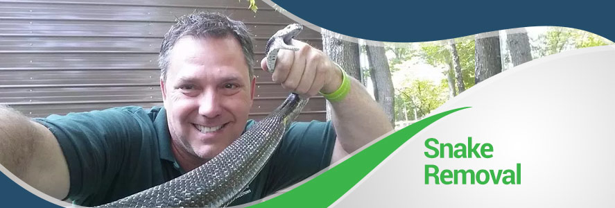 Snake Removal in Fairfax, Alexandria and Arlington, VA