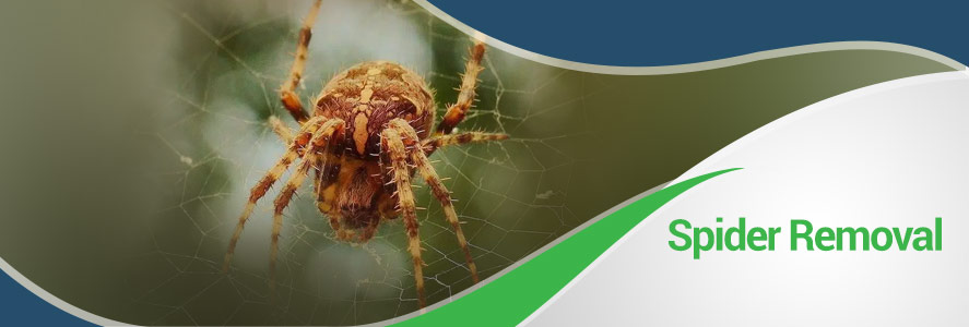 Spider Removal in Fairfax, Alexandria and Arlington, VA