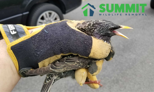 Bird Removal in Fredericksburg, VA