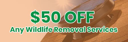 $50 Off Wildlife Removal Summit