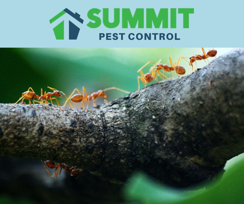 Ant pest control and prevention in Fredericksburg, Fairfax, Alexandria and Arlington