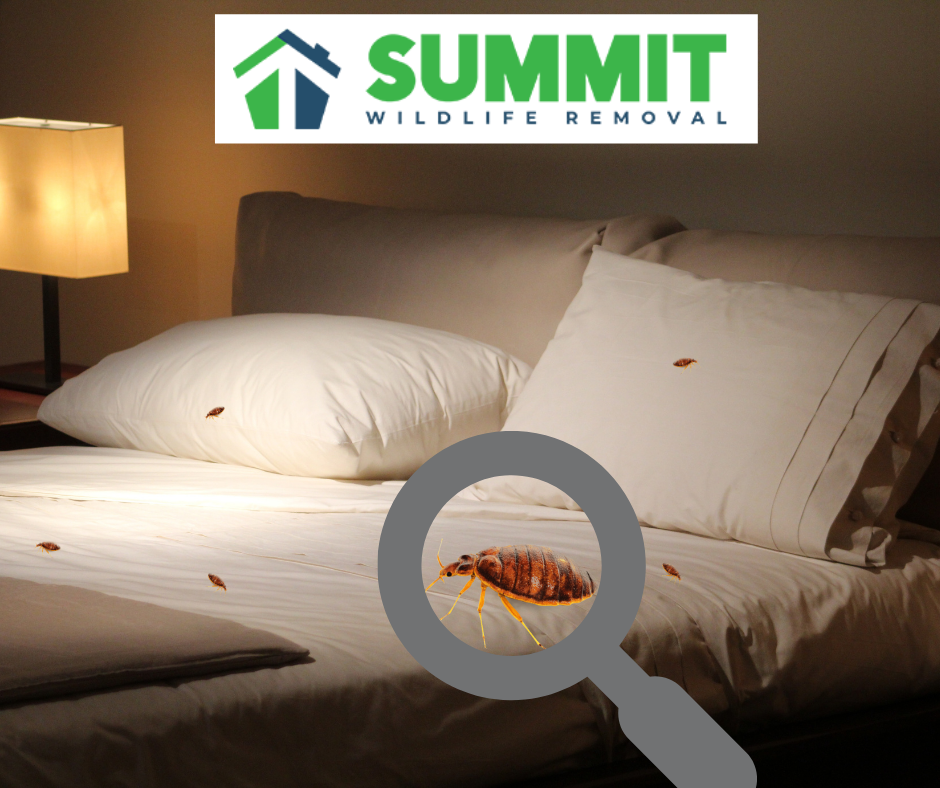 Bed bug prevention and removal in Northern Virginia